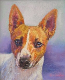 Pet portrait of a Foxy dog