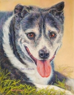 Pastel portrait of a staffy x cattledog