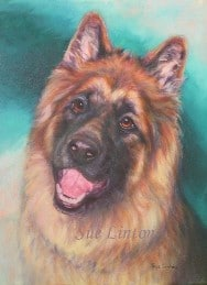 A pet portrait of a German Shepherd dog