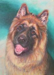 A pet portrait of a German Shepherd dog