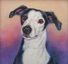Pet portrait of a dog