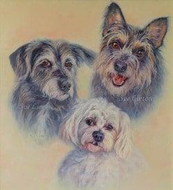A pet portrait of 3 terrier dogs