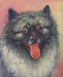 Pet portrait of a Belgian Barge Dog