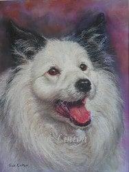 Pet portrait of a Border Collie dog