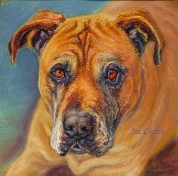 Portrait of a Bull Mastiff dog