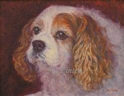 A pet portrait of a Cavalier Spaniel