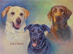 A pet portrait of 3 much loved dogs