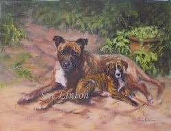A portrait of two brindle dogs