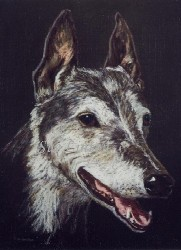 A detailed pastel pencil portait of a greyhound