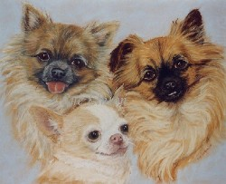 Pet portrait of 3 Chihuaha dogs