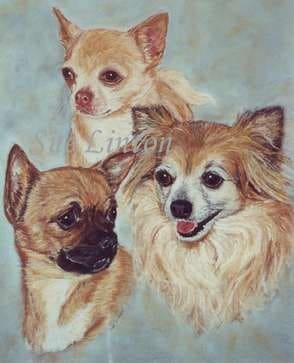 Pet portrait of 3 Chihuahas