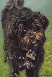 A pet portrait of a black dog