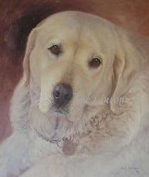 A portrait of a golden retriever dog
