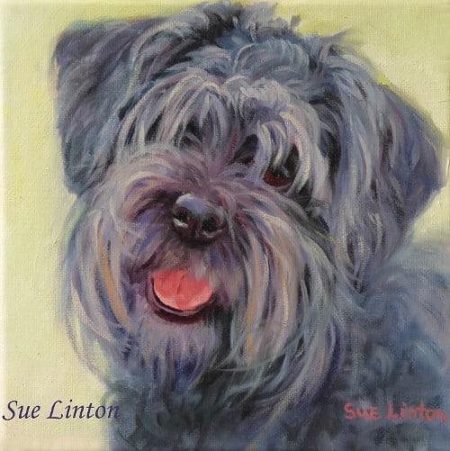 A pet portrait of a cute black schnauzer dog
