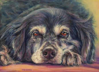 A pastel pet portrait of Shadow the ship's dog from the yacht Barinia of the TV show- Food and People of the Mediterranean