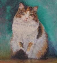 A pet portrait of a gorgeous cat