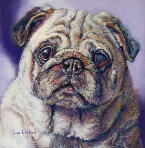 A pet portrait fo a cute Pug dog