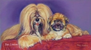 A pet portrait of a Lhasa Apso dog and pup