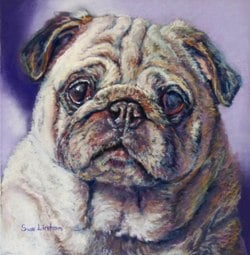 A pet portrait painting of a cute Pug dog