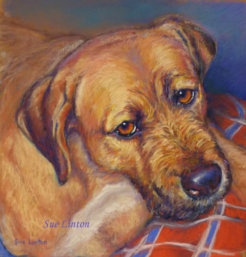 A memorial Pastel pet portrait of a dog painted from a photo