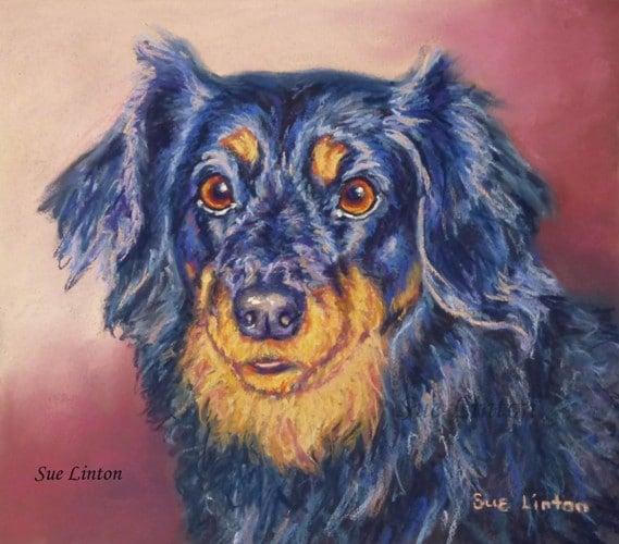 A pet portrait of a dog