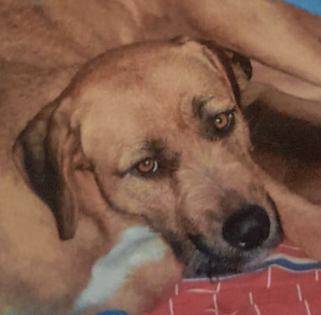 The reference photo for a pet portrait of a dog painted from a photo