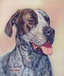 A pet portrait of a Bull Arab dog painted from a photo