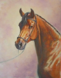 An oil equine portrait of an arab horse