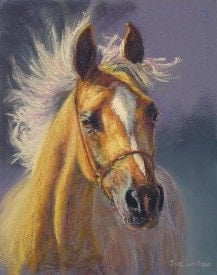 A pastel portrait of an arab horse from a photo