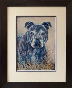 A Pastel portrait of a cattledog from a photo