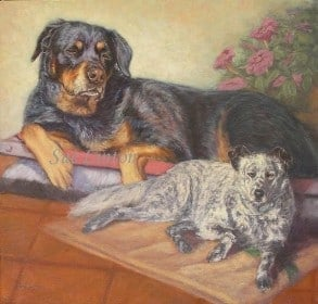 A portrait of 2 dogs placed together from separate photos