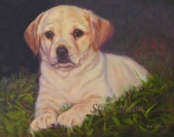 A portrait of a labrador pup on grass