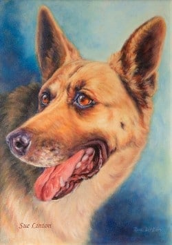 A coloured pet portrait of an alsatian created from a black and white photo