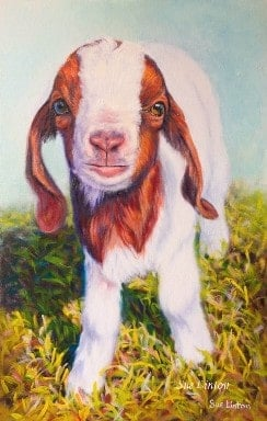 A pet portrait of a miniature goat painted from a photo