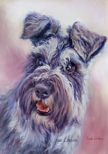A character filled oil portrait of a schnauzer puppy
