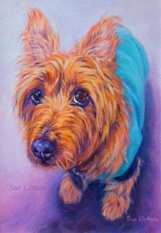 A poignant portrait of a small terrier
