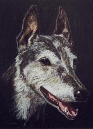 A pastel Pencil portrait of a dog