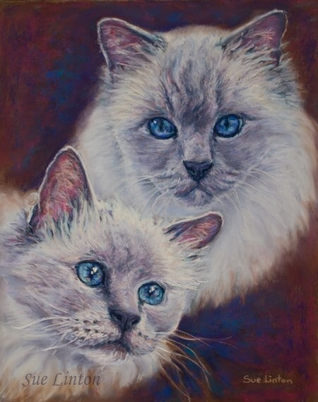 a Pastel portrait of 2 Birman cats